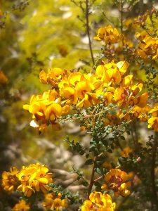 Private Nature Reserve - Flora